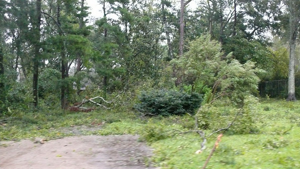 The McMain's driveway off Old Hammond Hwy