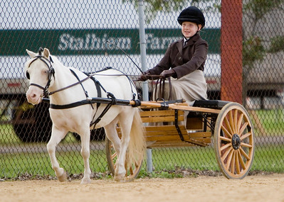 Dozens of mini pleasure drivers competed in various events at the Boone County Fair.