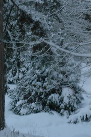 2008 Dec Snow Dogs
