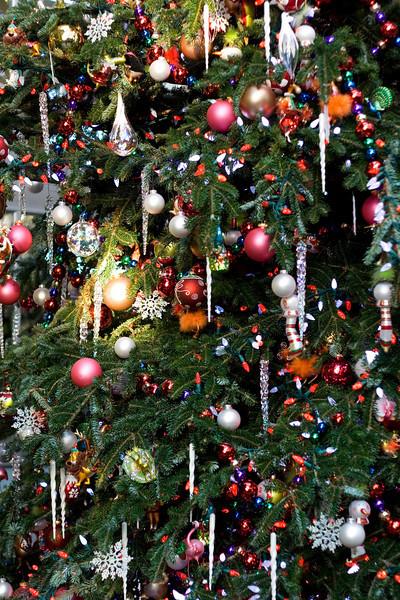 Thursday, November 27, 2008 Botanical Garden in DC.