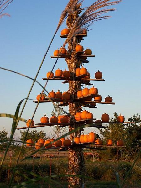 Another pumpkin tree...
