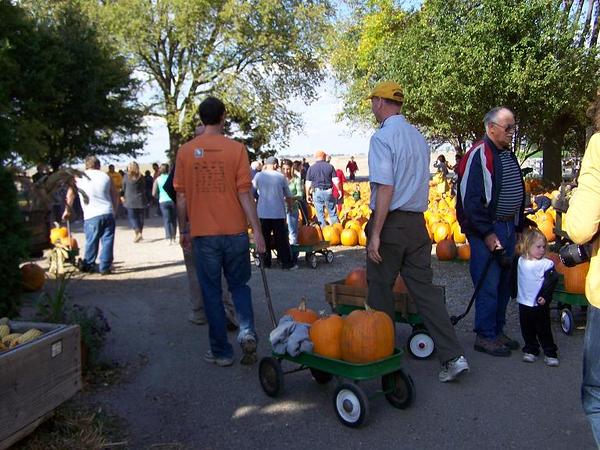Pumpkins and more pumpkins.