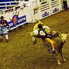 11-rodeo copy