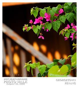 G3K_photowalk111s