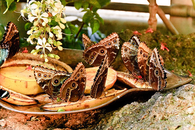 Butterflies on Fruit © Nora Kramer. All rights reserved.