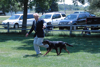 2009 NCGSC Bitch Puppy 9-12 month