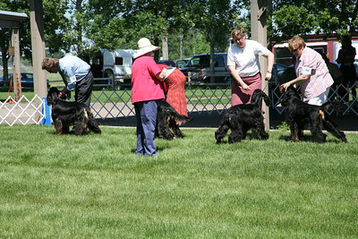2009 NCGSC Sweeps Best Puppy