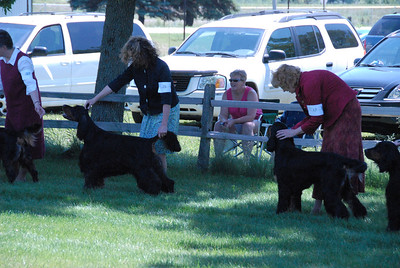 2009 NCGSC Winners Dog