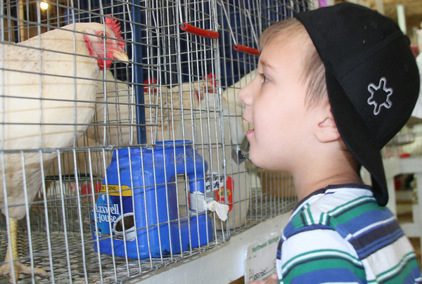 Record-Eagle/Laura<br /> Wright Branden Choike, 4, of Traverse City, peers at a Delaware chicken during Special Kids Day.