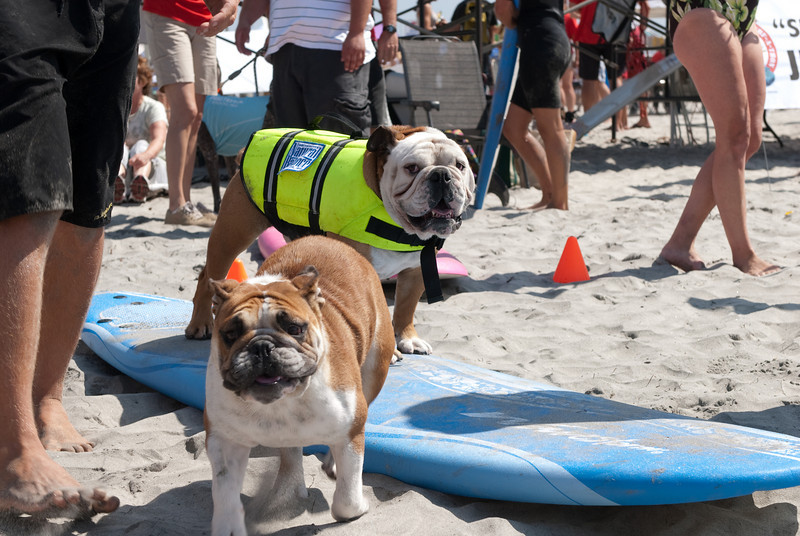 Surf Dogs-106