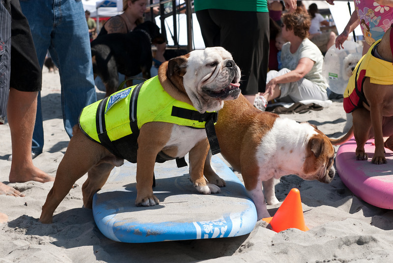 Surf Dogs-110