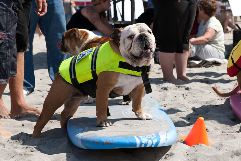 Surf Dogs-113