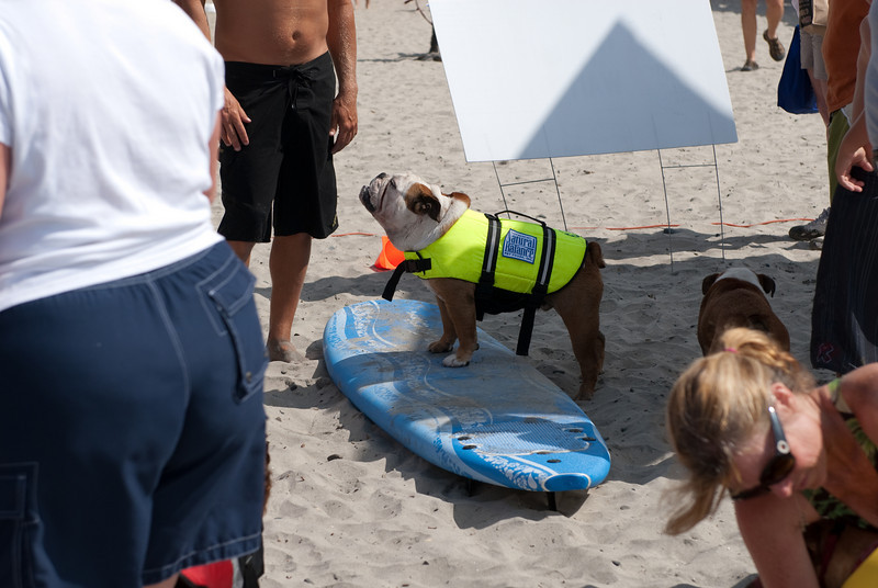 Surf Dogs-103