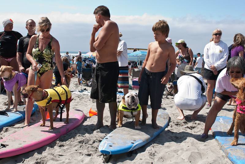 Surf Dogs-122