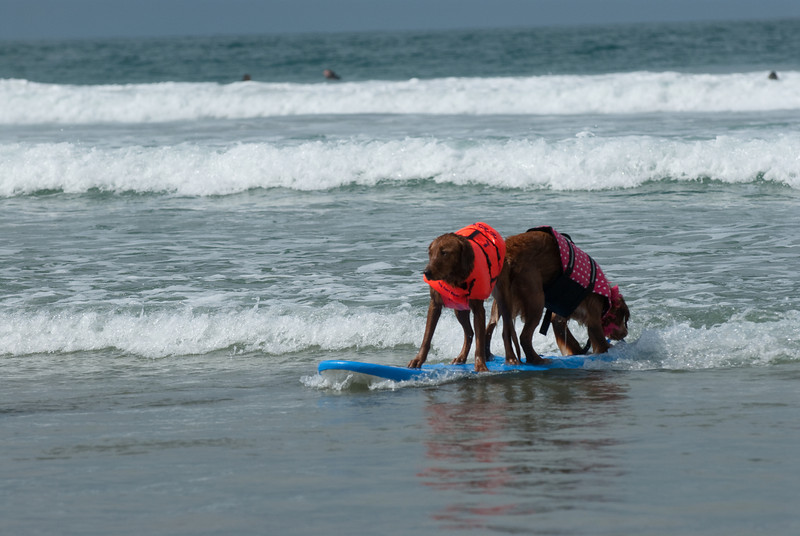 Surf Dogs-1726