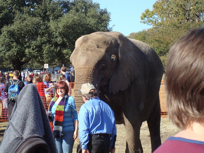 2010 04  Texas A&M Elephant Walk