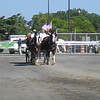 Hambo Pre-Race Parade: Clydesdales