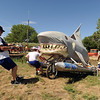 """Jump the Shark"" team members the  shark through the ditch.<br /> The 2010 Longmont Kinetic Sculpture Race was held at Union Reservoir on Saturday. For more photos and a video of Kinetics, go to  <a href=""http://www.dailycamera.com"">http://www.dailycamera.com</a>.<br /> Cliff Grassmick / August 28, 2010"