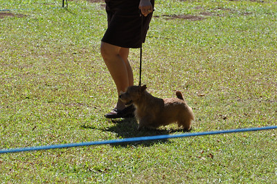 2010 Oct: Hawaii Terrier Group Show