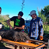 Cutting the pig out of its chicken wire.