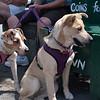 Focused Dogs