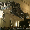 "Craft Brewers Conference welcome reception at the Chicago Field Museum.   ""Sue"", the most complete T-Rex fossil is pictured in the foreground<br /> <br /> (iPhone Picture)"