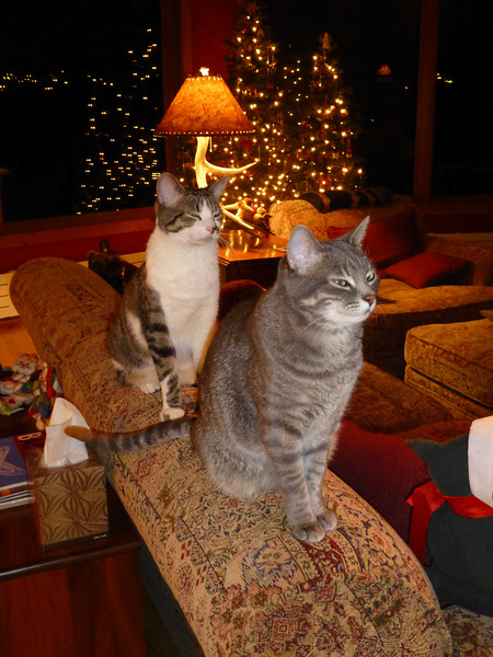 Christmas Eve pose