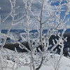 Frost on the bare Aspens.