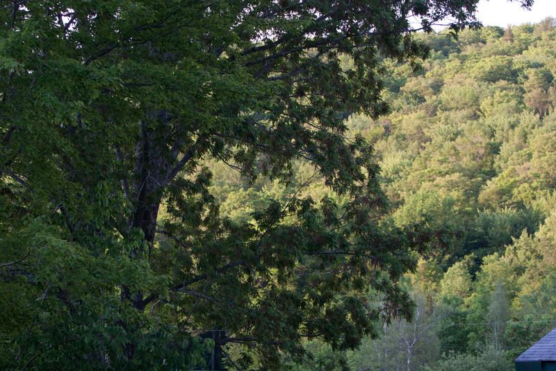 20110606-309