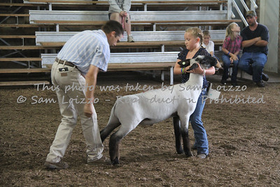 20110727-Loizzo Photography-Rock County Fair - Sheep-0012