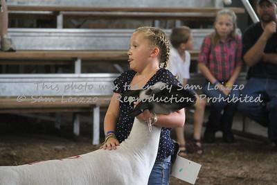 20110727-Loizzo Photography-Rock County Fair - Sheep-0015