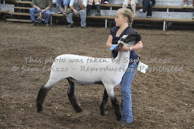 20110727-Loizzo Photography-Rock County Fair - Sheep-0002