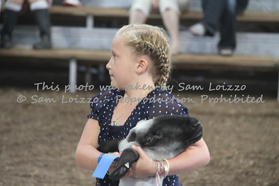 20110727-Loizzo Photography-Rock County Fair - Sheep-0003