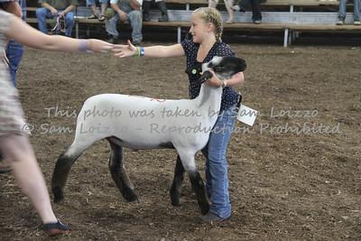 20110727-Loizzo Photography-Rock County Fair - Sheep-0001