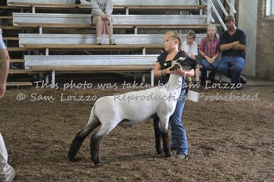 20110727-Loizzo Photography-Rock County Fair - Sheep-0013