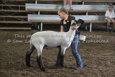 20110727-Loizzo Photography-Rock County Fair - Sheep-0009