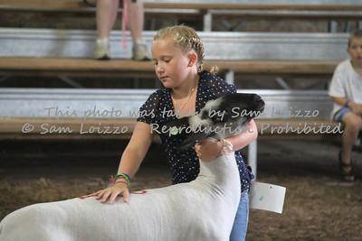 20110727-Loizzo Photography-Rock County Fair - Sheep-0011