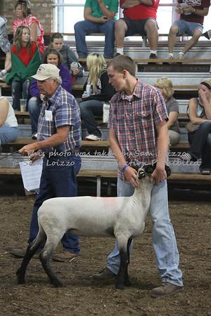20110727-Loizzo Photography-Rock County Fair - Sheep-0022