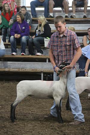 20110727-Loizzo Photography-Rock County Fair - Sheep-0024