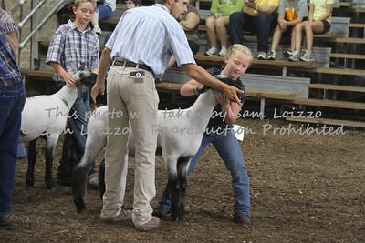 20110727-Loizzo Photography-Rock County Fair - Sheep-0006