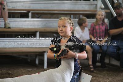 20110727-Loizzo Photography-Rock County Fair - Sheep-0014