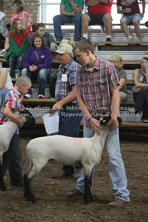 20110727-Loizzo Photography-Rock County Fair - Sheep-0023
