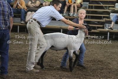 20110727-Loizzo Photography-Rock County Fair - Sheep-0008