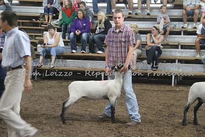 20110727-Loizzo Photography-Rock County Fair - Sheep-0021