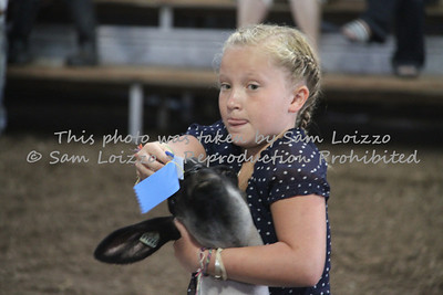 20110727-Loizzo Photography-Rock County Fair - Sheep-0004