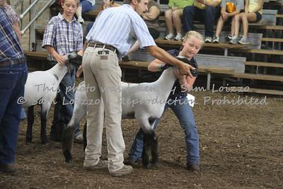 20110727-Loizzo Photography-Rock County Fair - Sheep-0007