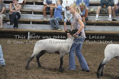 20110727-Loizzo Photography-Rock County Fair - Sheep-0019
