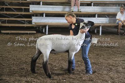 20110727-Loizzo Photography-Rock County Fair - Sheep-0010