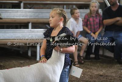 20110727-Loizzo Photography-Rock County Fair - Sheep-0016