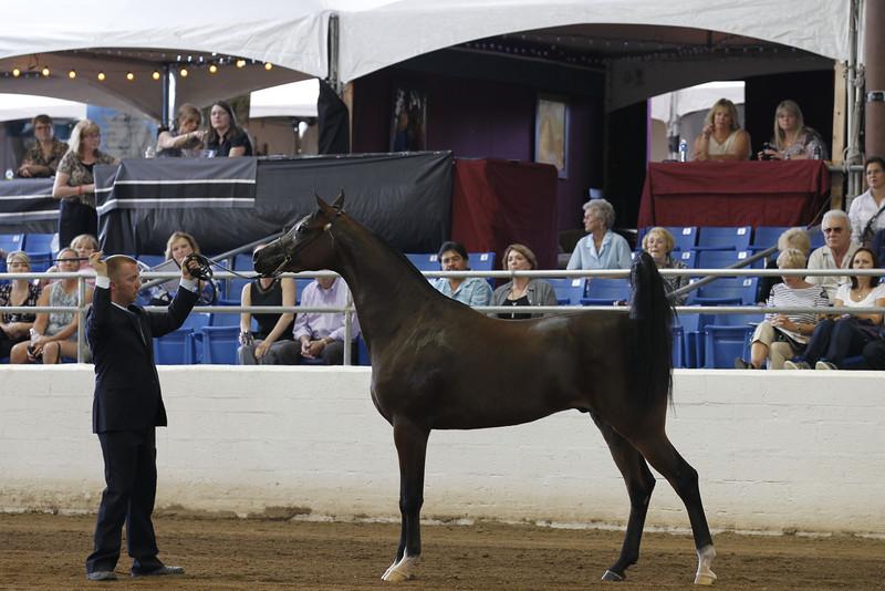 2011 Arabian Breeder Finals